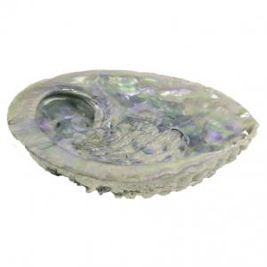 Mooie Abalone schelp